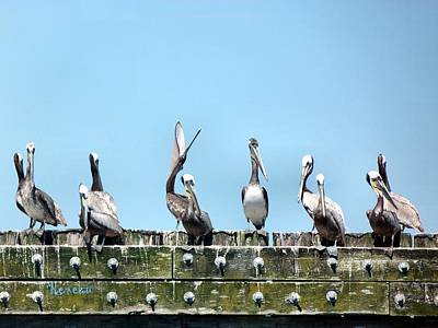 Photograph - Pelican Briefing by Sadie Reneau