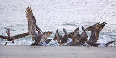 Photograph - Pelican Brunch by Patricia Schaefer