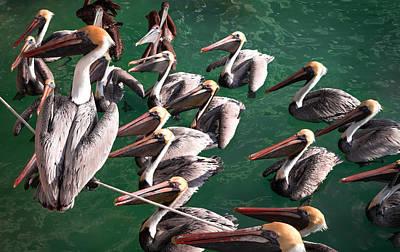 Tightrope Walking Photograph - Pelican Choir Rehearsal by Karen Wiles