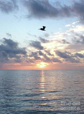 Photograph - Pelican Dawn by Barbara Von Pagel