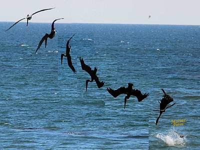 Pelican Dive 7 Photos In 2.5 Seconds Art Print