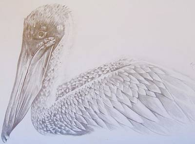 Drawing - Pelican by Emma Lyon
