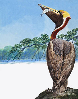 Blue Throat Painting - Pelican by English School