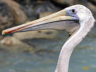 Pelican Face  That Only A Mother Could Love Art Print