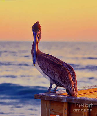 Photograph - pelican, Florida, pier, ocean by Tom Jelen