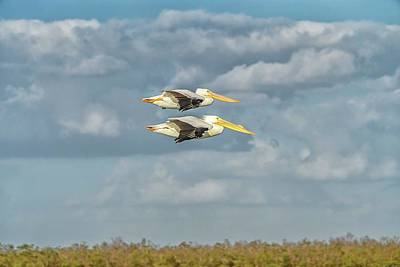 Photograph - Pelican Flying Duo Wide by Framing Places