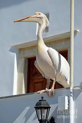 Pelicans Photograph - Pelican by George Atsametakis