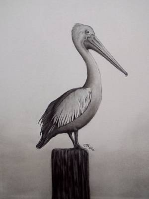 Photograph - Pelican by Gilbert Photography And Art