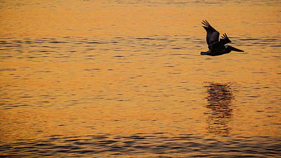 Photograph - Pelican Glide Delray Beach Florida by Lawrence S Richardson Jr