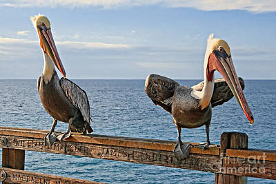 Photograph - Pelican - Go Get The Fish by Gabriele Pomykaj