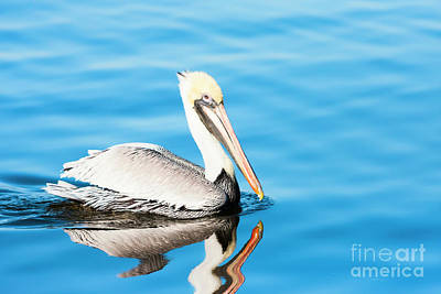 Photograph - Pelican In Blue Waters by Michael McStamp