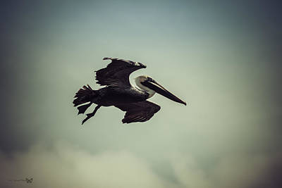 Photograph - Pelican In Flight  by Debra Forand