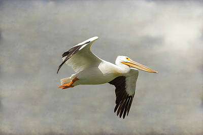 Photograph - Pelican In Flight by James BO Insogna