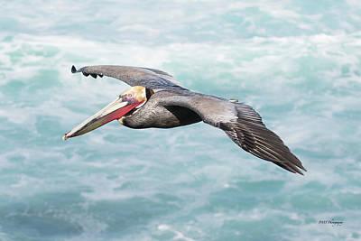Photograph - Pelican In Flight by Paul Treseler