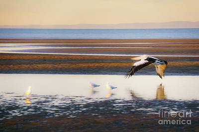 Photograph - Pelican In Flight by Silken Photography