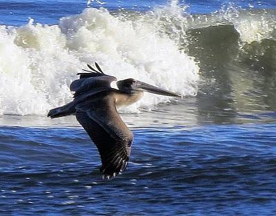 Photograph - Pelican In Flight With Waves by Ellen Meakin