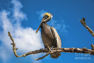 Photograph - Pelican In Paradise by Mariola Bitner