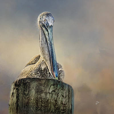Photograph - Pelican In Paradise Squared by TK Goforth