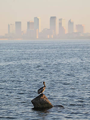 Photograph - Pelican In Tampa Bay by Jack Nevitt