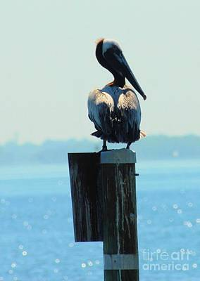 Photograph - Pelican In The Bay by Cheryl Poland