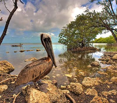 Pelican In The Florida Keys Art Print