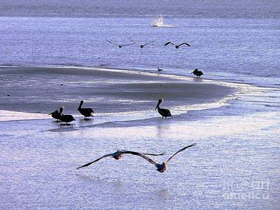 Pelican Island Art Print by Al Powell Photography USA