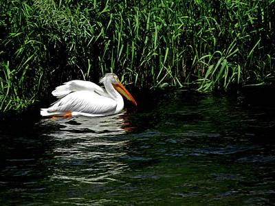 Photograph - Pelican by Jacqueline  DiAnne Wasson