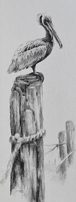 Jimmy Drawings Painting - Pelican by Jim Young