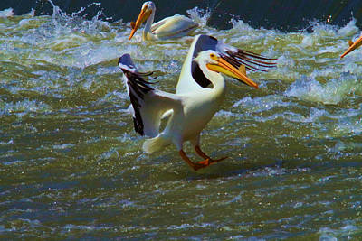Pelican Landing Art Print by Jeff Swan