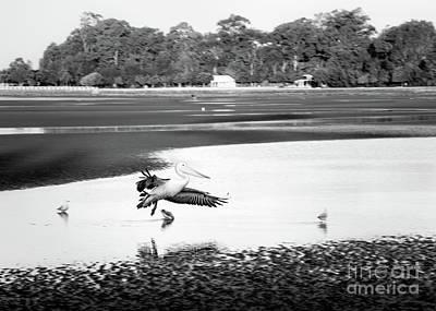 Photograph - Pelican Landing by Silken Photography