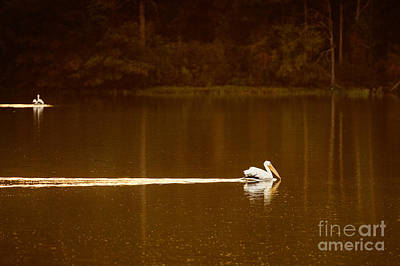 Photograph - Pelican Landing by Tamyra Ayles
