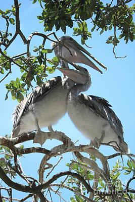 Photograph - Pelican Love by Carol Groenen