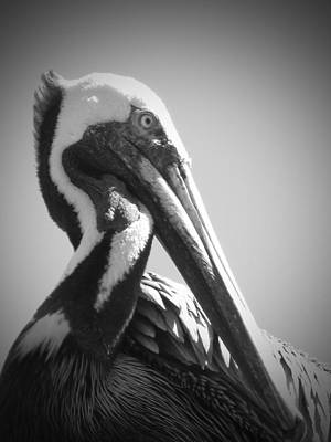 Pelican Art Print by Megan Verzoni