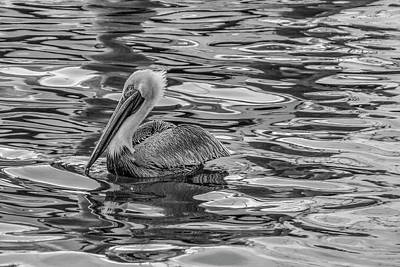 Photograph - Pelican Monet In Black And White by Debra and Dave Vanderlaan
