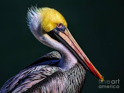 Photograph - Pelican Oil Painting Effect by Paulette Thomas