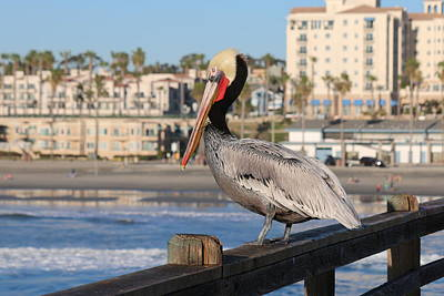 Photograph - Pelican On A Pier  by Christy Pooschke
