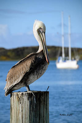 Pilings Painting - Pelican On A Post Morro Bay California by Barbara Snyder