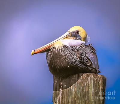 Pelican On Break Art Print