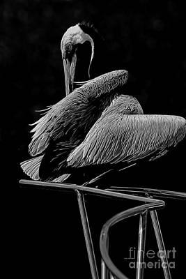 Photograph - Pelican On Chrome by Deborah Benoit