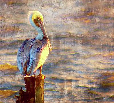 Brian Lukas Photograph - Pelican On Pause by Brian Lukas