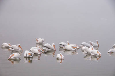 Photograph - Pelicans On The Lake by Carolyn Dalessandro