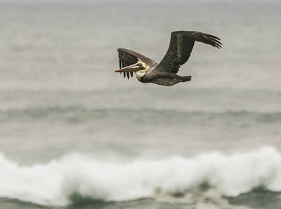 Photograph - Pelican Over The Surf by Loree Johnson