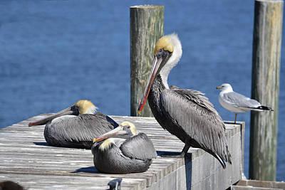 Pelican Pad With Gull Art Print