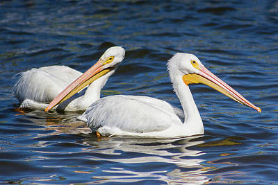 Photograph - Pelican Pair by Dawn Currie