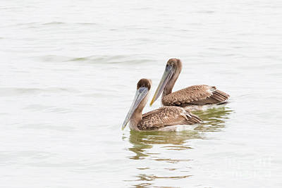 Photograph - Pelican Pair by Michael McStamp