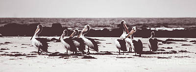 Photograph - Pelican Panorama by Jorgo Photography - Wall Art Gallery