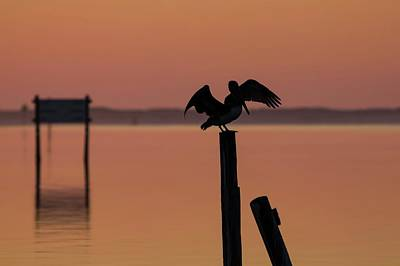 Door Locks And Handles - Pelican Paradise  by Gary Oliver
