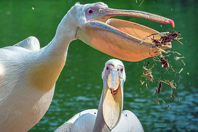 Photograph - Pelican Party by Nadia Sanowar