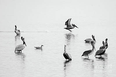 Photograph - Pelican Party by Norma Warden