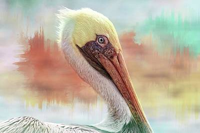 Photograph - Pelican Pasteles by Alice Gipson